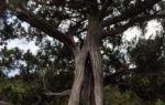 Реликтовая можжевеловая роща в п. новый свет (крым): фото, как добраться, описание