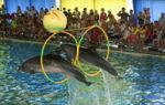 В городе керчь появится дельфинарий
