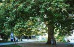 Центральная набережная имени ленина в ялте: фото, отели, описание