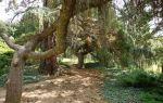 Парк монтедор – крым, ялта, никитский ботанический сад
