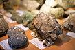 Музей природы Карадага в Курортном, Крым: адрес, фото, отзывы
