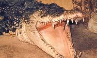 Крокодиляриум в Ялте: сайт, цены, фото фермы крокодилов, отзывы, описание