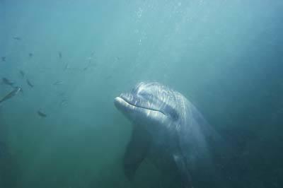 Дельфины Черного моря: фото, какие виды живут, опасны ли