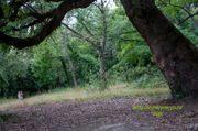 Массандровский парк в Ялте (Крым): фото, как добраться, описание