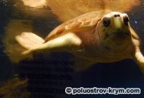Севастопольский аквариум-музей: официальный сайт, цены, фото, описание