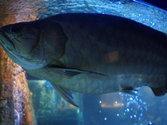 Медузы Азовского моря: опасны ли, фото, описание, виды в Крыму