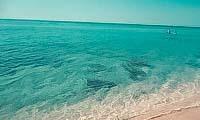 Коса Беляус в Крыму: фото, пляжи, отели, отдых, на карте, отзывы