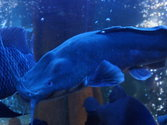 Акулы в Азовском море – есть ли, какие виды водятся, фото